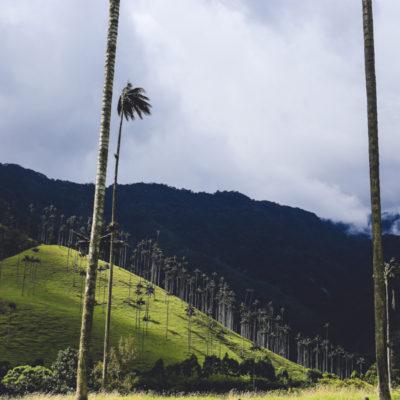 Vallee del Cocora